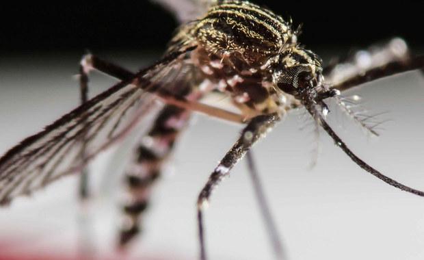 Wirus Zika może wiosną zagrozić Europie