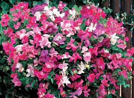 Wiszące pojemniki z kwiatami stanowią piękną dekorację /kdc.pl
