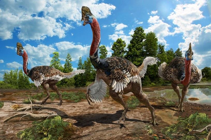 Wizja artystyczna Corythoraptor jacobsi /materiały prasowe