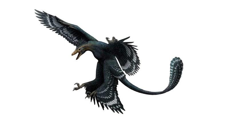 Wizja artystyczna Zhongjianosaurus yangi - według naukowców był niewielkich rozmiarów i miał skrzydła /fot. Vertebrata PalAsiatica /materiały prasowe