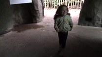 Wkurzony goryl. Kobieta z córką zamarły