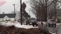 Wkurzony indyk atakował samochody