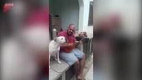 Właściciel gra na ukulele a pies... śpiewa
