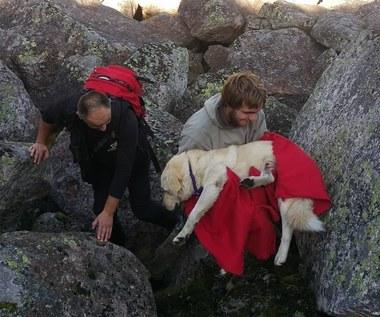 Właściciele szukali go 25 dni. Nero był uwięziony w górach