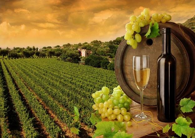 Włosi szczycą się największym zróżnicowaniem winorośli /123/RF PICSEL