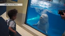 Wodna salwa na powitanie. Wieloryb cieszy się na widok chłopca