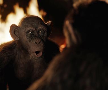 """""""Wojna o Planetę Małp"""": Zła małpa [fragment]"""