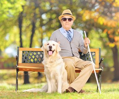 Wolny wstęp  dla psa przewodnika