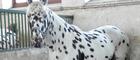 """Wreszcie znamy listę koni na aukcję """"Pride of Poland"""". Jest jednak niekompletna"""