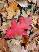 Wrzesień - listopad'14