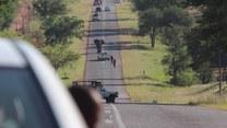Wściekły słoń zatrzymał ruch na drodze