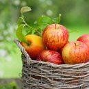 Wspaniałe owoce dla dzieci