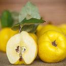 Wspaniały kwaśny owoc