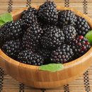 Wspaniały leśny owoc
