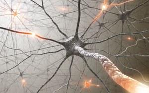 Wszczepione neurony zintegrowały się z mózgiem