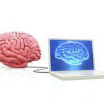 Wszczepiono informację do małpiego mózgu