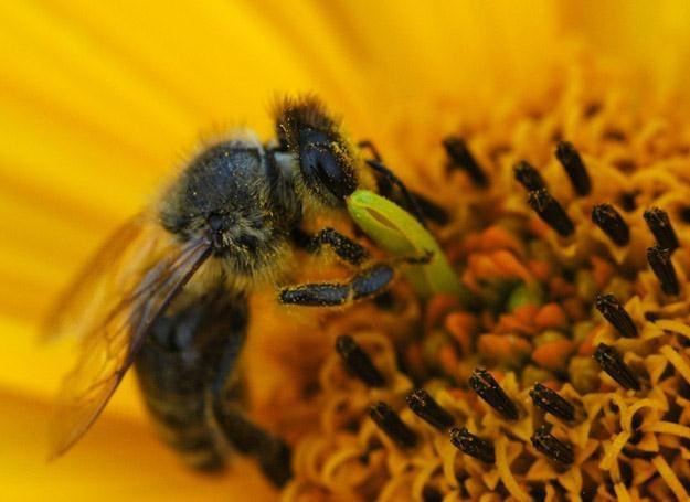 Wszystkie pszczele produkty mają wyjątkowe właściwości /© Panthermedia