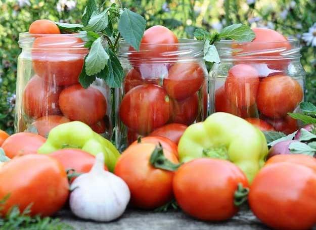 Wybieraj dojrzałe pomidory /©123RF/PICSEL