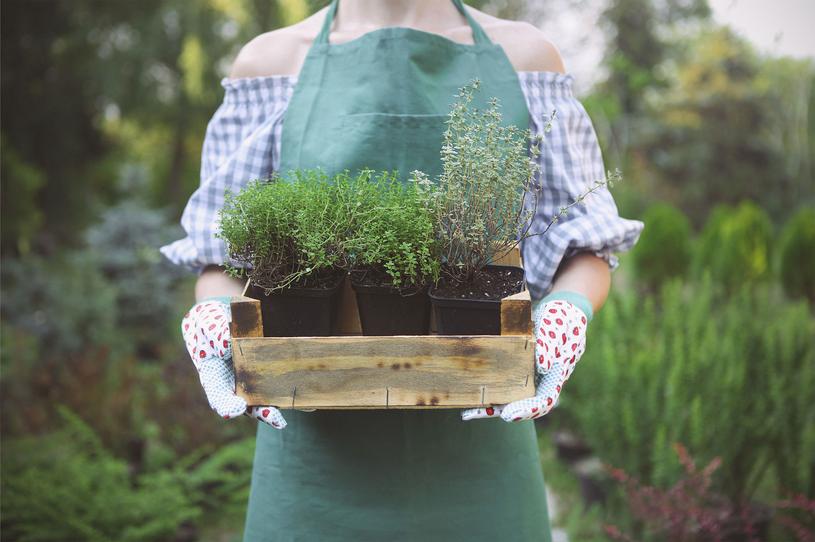 Wybierając rośliny, zwracajmy uwagę na to, aby nie miały przesuszonych korzeni /Picsel /123RF/PICSEL