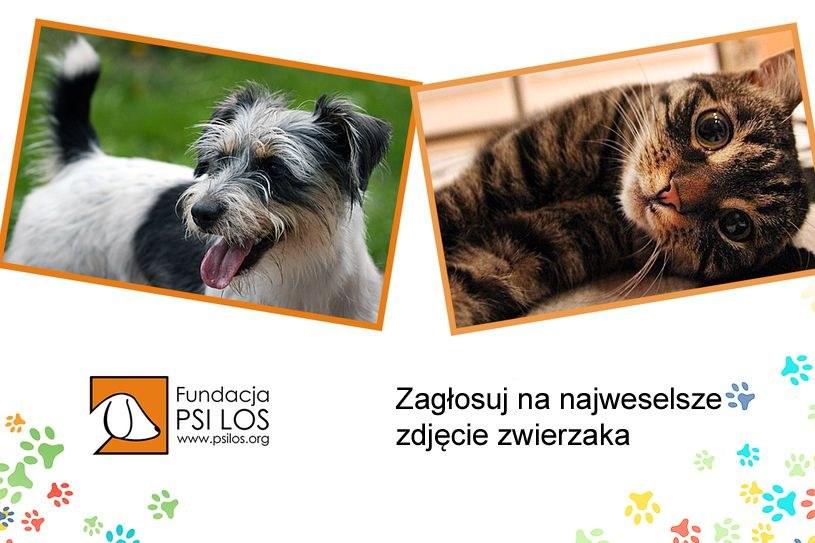 Wybierz najbardziej zabawne zdjęcie zwierzaka! /INTERIA.PL