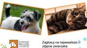 Wybierz najbardziej zabawne zdjęcie zwierzaka!