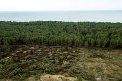 Wycięty las w Łebie. Bardzo przykry widok...