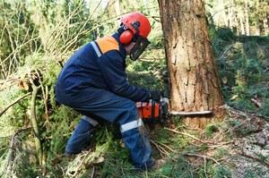 Wycinanie lasów ochładza klimat