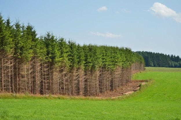 Wycinka drzew na cele energetyczne powoduje wyższe emisje CO2 niż uwolnienie tej samej ilości energii z paliw kopalnych /123RF/PICSEL