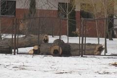 Wycinka drzew w Lublinie pod lupą prokuratury