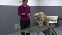 Wyjątkowa szkoła. Tu uczą psy… zawodu!