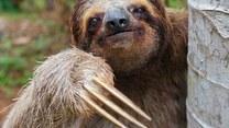 Wyjątkowo dziwne ssaki