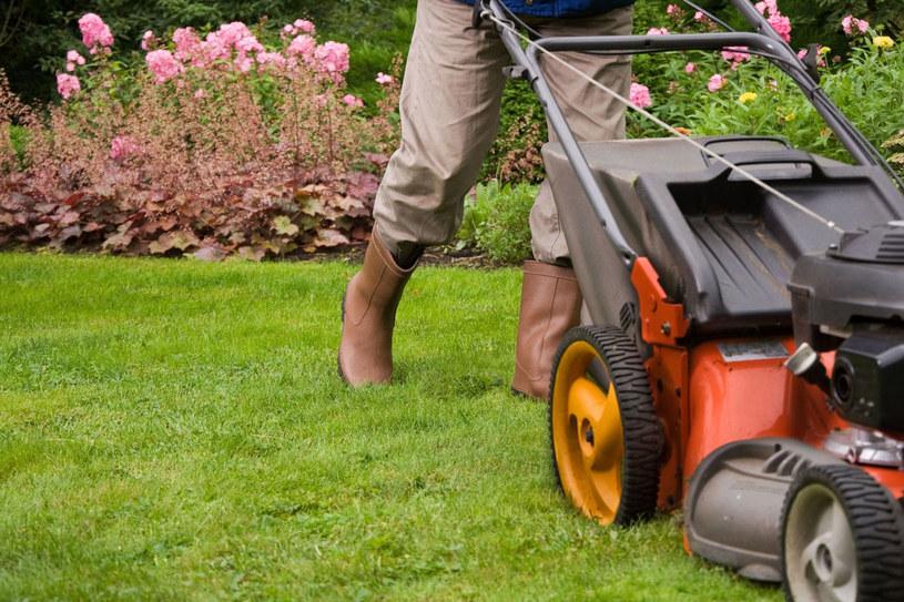 Wykształcony trawnik podlewamy raz w tygodniu. Gdy jest bardzo upalnie – co trzy dni /123RF/PICSEL