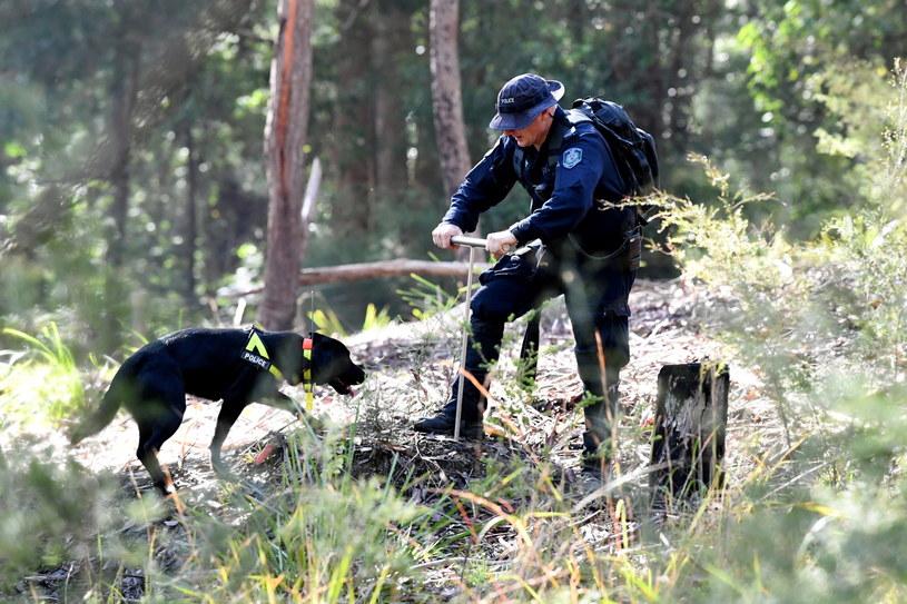Wznowiono poszukiwania w miejscu zaginięcia trzyletniego Williama Tyrrella /PAP/EPA