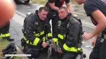 Wzruszająca walka o życie kota. Strażacy podawali mu tlen