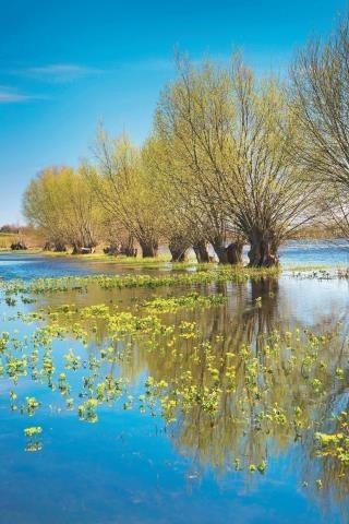 Z dnia na dzień w rzece  przybywa wody. Wierzby wypuszczają listki, zaczynają kwitnąć kaczeńce. Do bagiennej doliny zawitała wiosna. /BE&W Agencja Fotograficzna