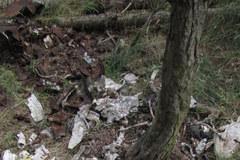 Z lasu koło Stargardu Szczecińskiego ktoś ukradł samolot z czasów II wojny