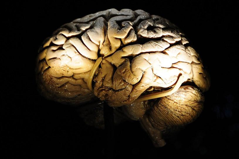 Z powody dużej liczby przyswojonych informacji, z wiekiem mózg pracuje wolniej /AFP