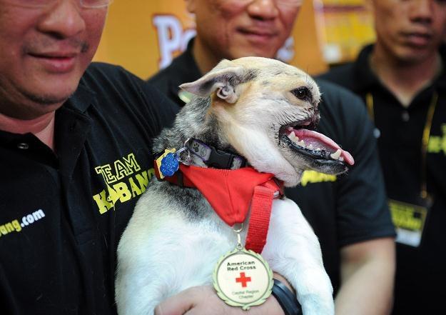 Za bohaterstwo pies zapłacił wysoką cenę... /AFP