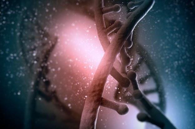 Za progerię odpowiada mutacja genu LMNA kodującego białko zwane laminą A /©123RF/PICSEL