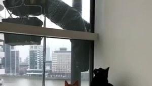 Zabawy kotów z mężczyzną podczas mycia okien