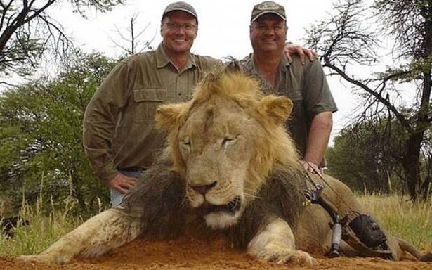Zabicie lwa Cecila wywołało falę oburzenia /Twitter