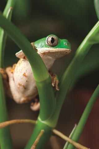 Żaby są wyjątkowo wrażliwe na wyrąb lasów. Grozi im zagłada. /Arch/123RF Picsel