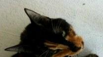 Zagubiona kotka przeszła 300 km w poszukiwaniu domu!