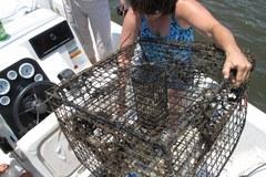 Zakaz połowów wprowadzono zbyt wcześnie?