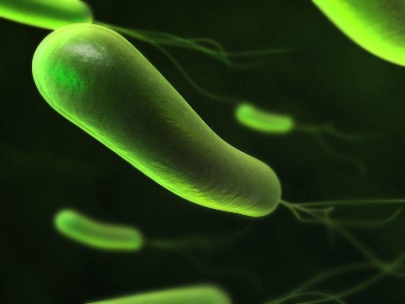 Zakażenie bakteriami H.pylori jest trudne do opanowania /123RF/PICSEL