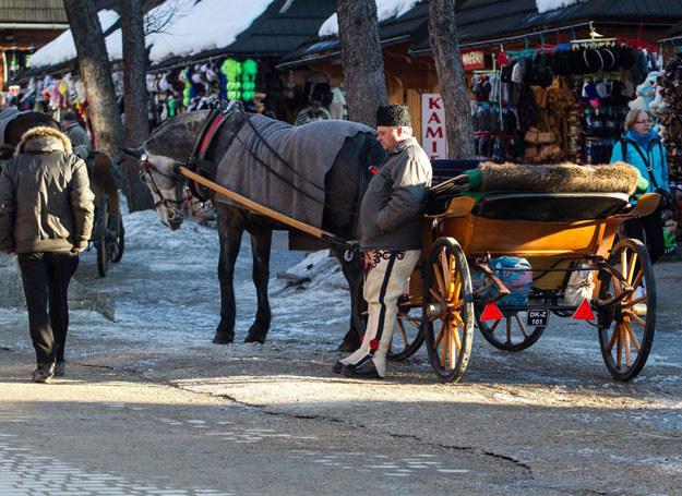 Zakopane Zima w Tatrach. Woznica na Krupowkach czeka na turystow /TOMASZ RYTYCH/REPORTER /East News