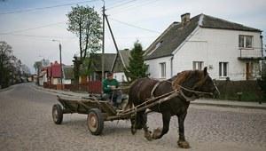 Zamiast woźnicy zaprzęgiem powoził koń