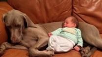 Zamiast wygodnego nosidełka maluch wybrał drzemkę w objęciach psa