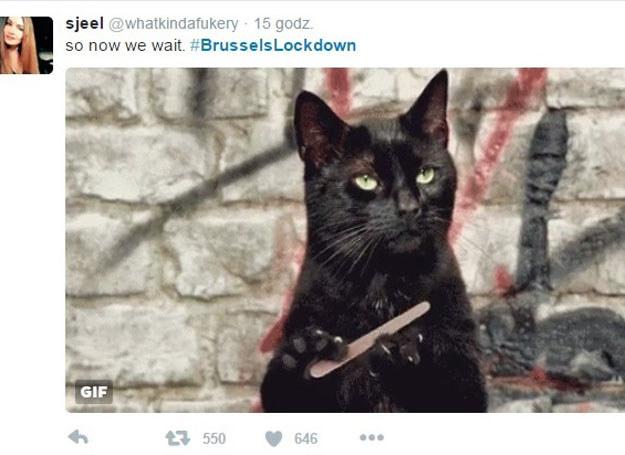 Zamiast zdjęć ulic - koty. Tak mieszkańcy Brukseli utrudniali terrorystom śledzenie policyjnej akcji w social mediach /Twitter