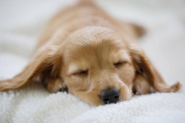 Zanim adoptujecie psa, dobrze się przygotujcie /123/RF PICSEL